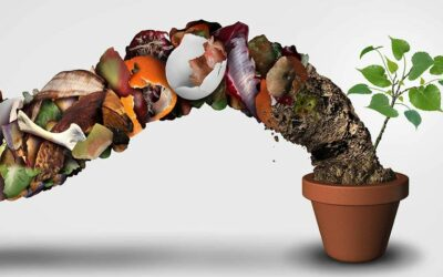 What happens to the organics collected by Jeffries?