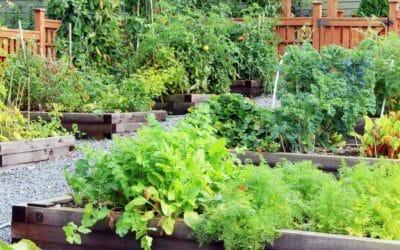 Make over my garden