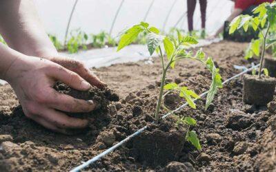 Raise seeds & Plants