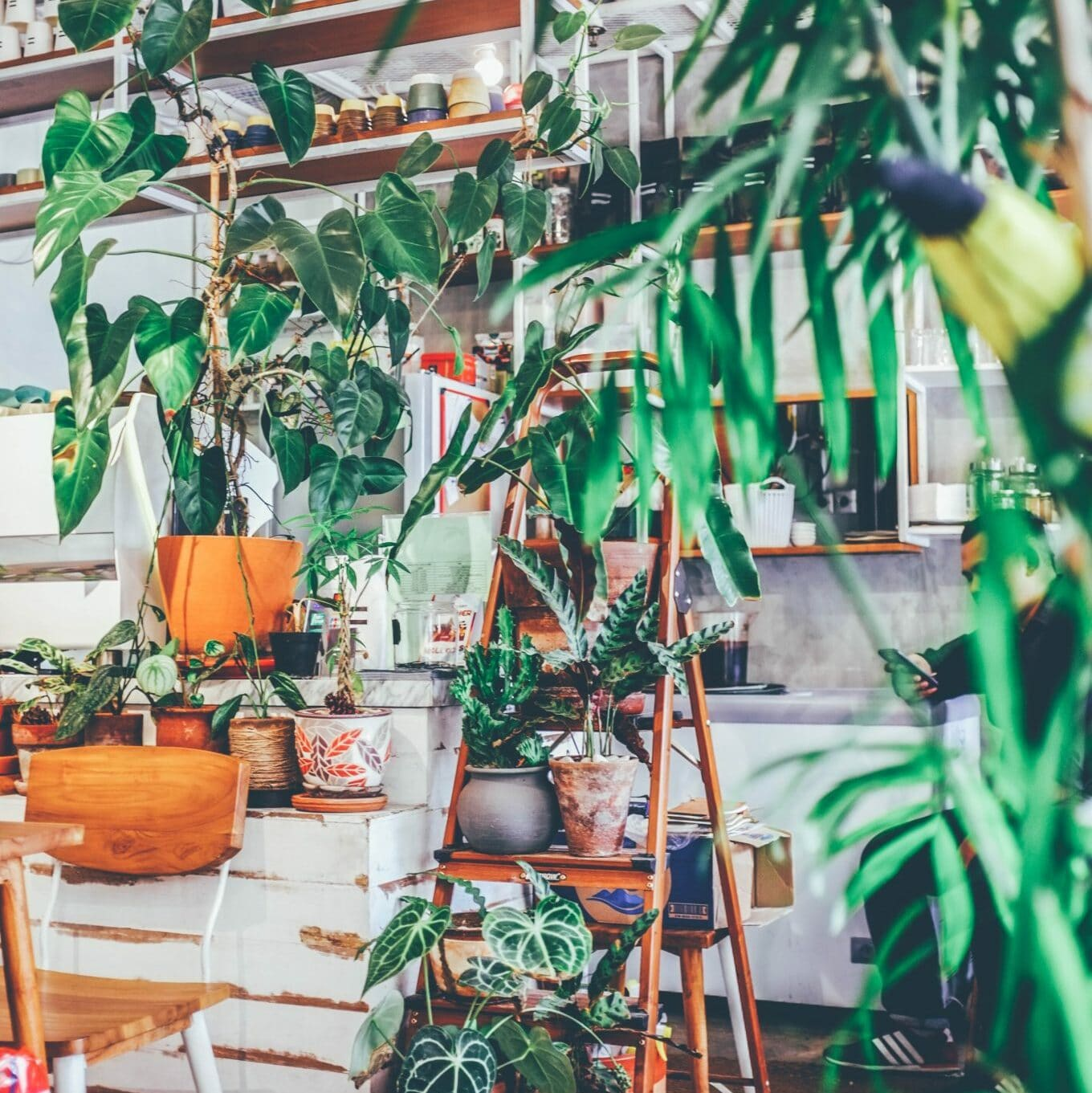 Caring for your indoor plants during winter