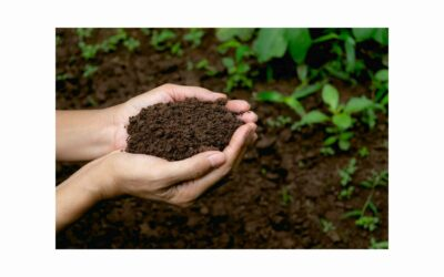 Get Down and Dirty with your soil